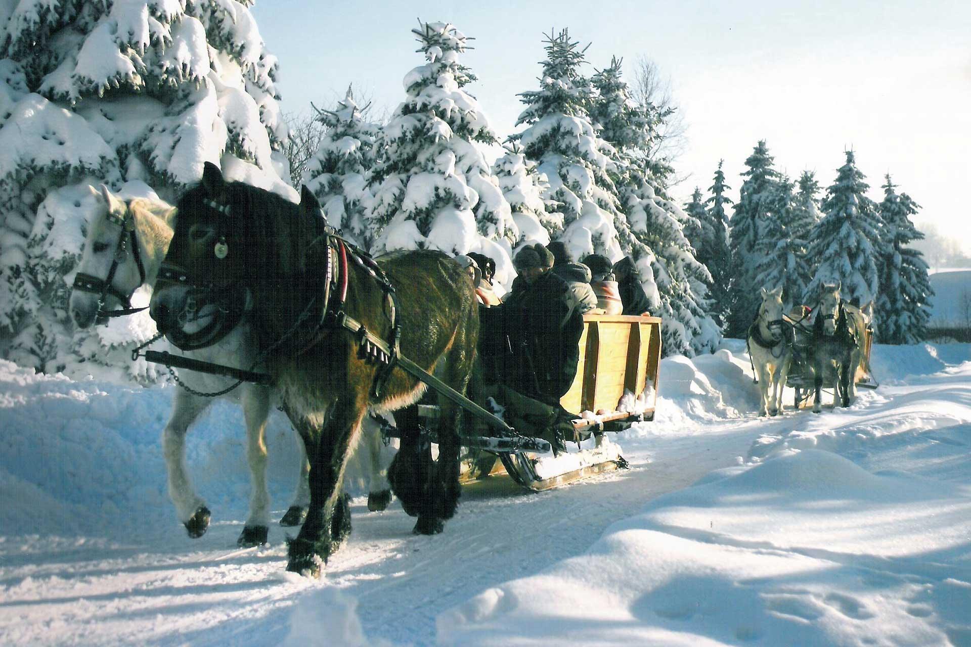 hotel-berghof-winter-kutschfahrt